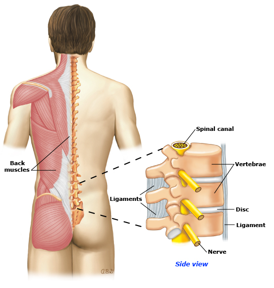 Patient Education Low Back Pain In Adults Beyond The Basics