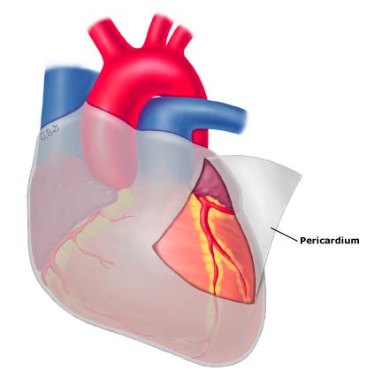 Pericardium anatomy PI - UpToDate