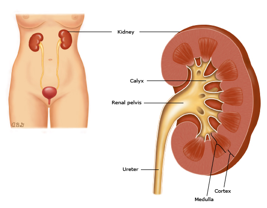 Patient Education Protein In The Urine Proteinuria Beyond The