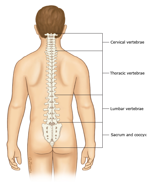 Patient education: Low back pain in adults (Beyond the